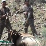 Elk Archery Success Video