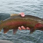Good Fishing Continues In the Helena Area Reservoirs Report: 5/21/2012