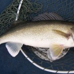 Plenty of Good Fishing in the Eastern Montana Fishing Report: 6/4/12