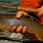 Good Dry Fly Fishing in the Missoula Fly Fishing Report