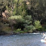 Stand Up Paddle Montana Fly Fishing – Combining the Latest Trend with the Greatest Fishing