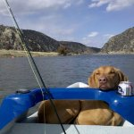The Dog Days of Summer, Good Fishing and Archery Preparation: Captain&#8217;s Column