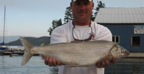 flathead_whitefish_aug2_07