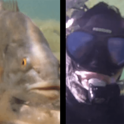 Diver Attacked by Smallmouth Bass