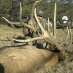 Great Bull Elk