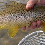 Montana Fly Fishing Report by Scott Anderson of Montana Fishing Company &#8211; 3.25.13