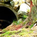 """Most Front Grizzlies Still in Dens"" Reports FWP"