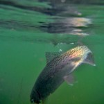 Montana Fly Fishing Report by Scott Anderson of Montana Fishing Company – 4.26.13