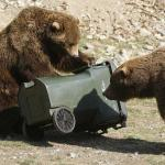 "FWP Warns Public that It's ""Time to Prepare for the Bears"""