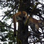 More Southwestern Montana Mountain Lion Hunting Districts Closed