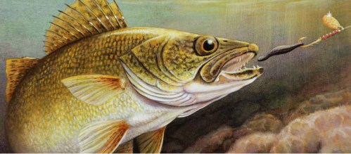 2011 Walleye Stamp Art - 1st Place