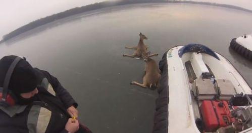 deer-2-