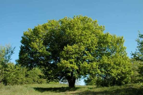 Il maestoso albero su I Monti