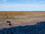 Harris Neck with Dogs - 11.24.2013 - 13.05.54