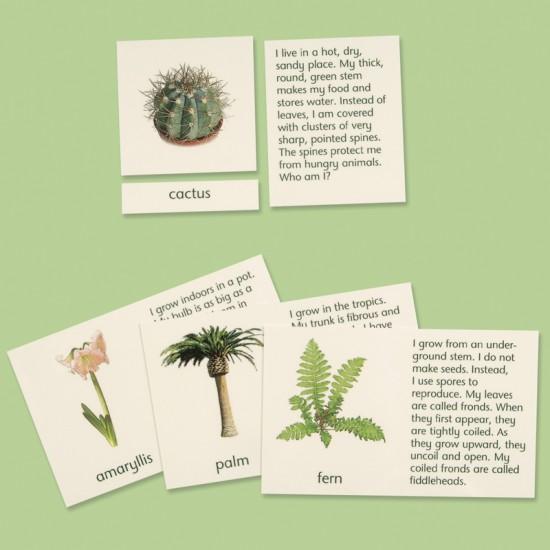 Plants \