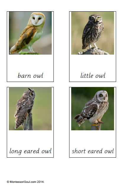Owls (types of)