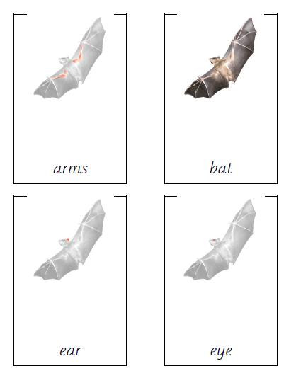Parts of a Bat cards