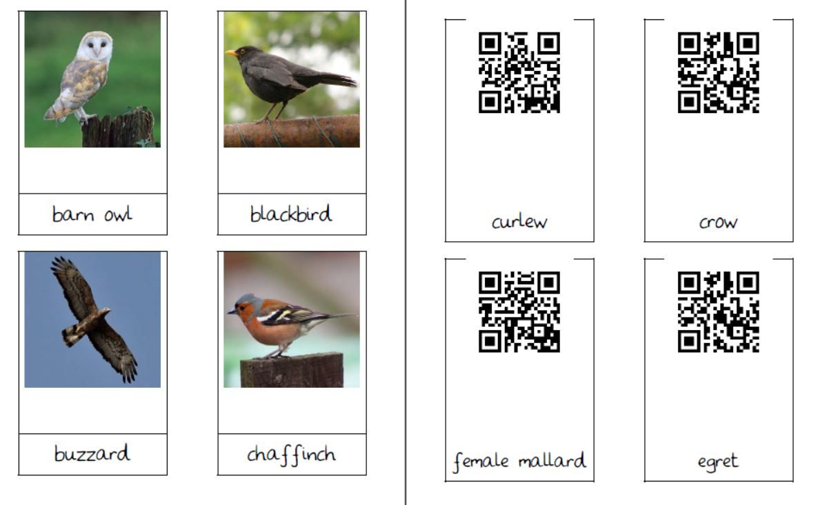 British bird cards with QR codes
