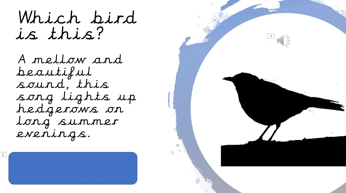 Bird song quiz
