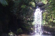 Visiting a Rainforest in Puerto Rico
