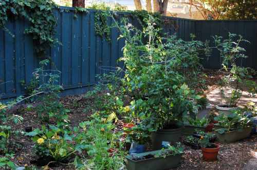 Medium Of Backyard Gardening Blog