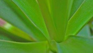 PUB : RIVIERA PLANTES