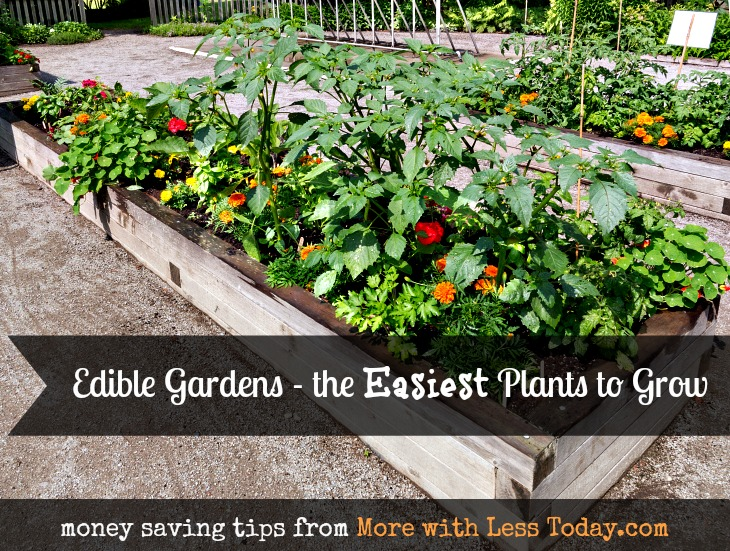 easiest-plants-to-grow