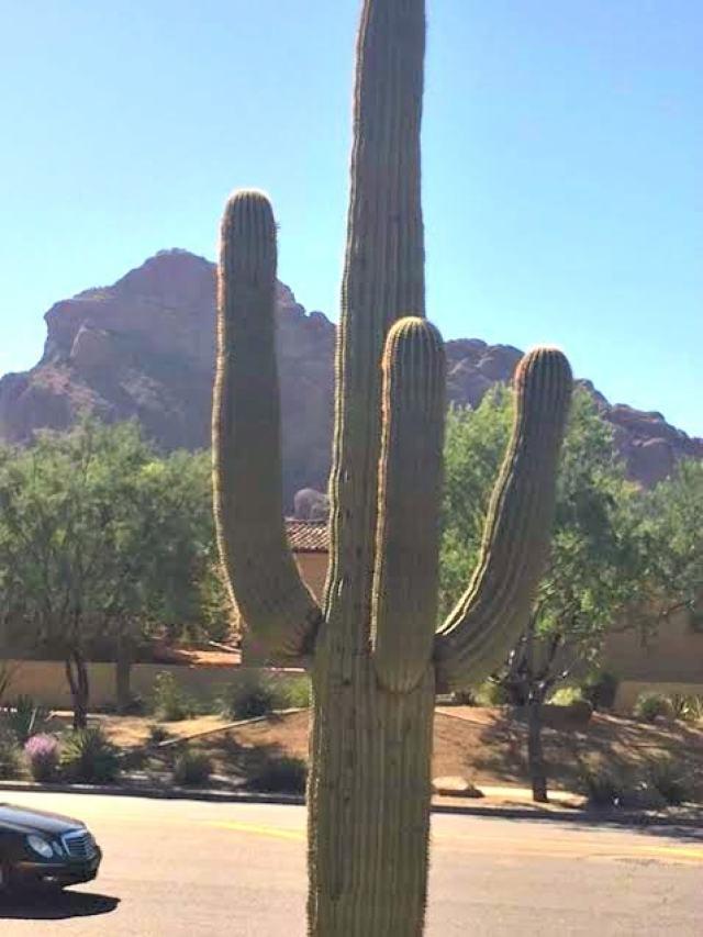 Phoenix road trip