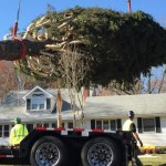 Downtown Partnership Looking for Tree For Courthouse Square Festivities