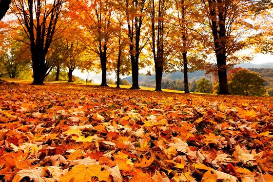 Hd Wallpaper Fall Leaf Change September Is Here Motherhood Full Of Dreams