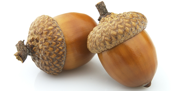 Fall Cartoon Wallpaper House Republicans Defund The Nonexistent Acorn Yet Again