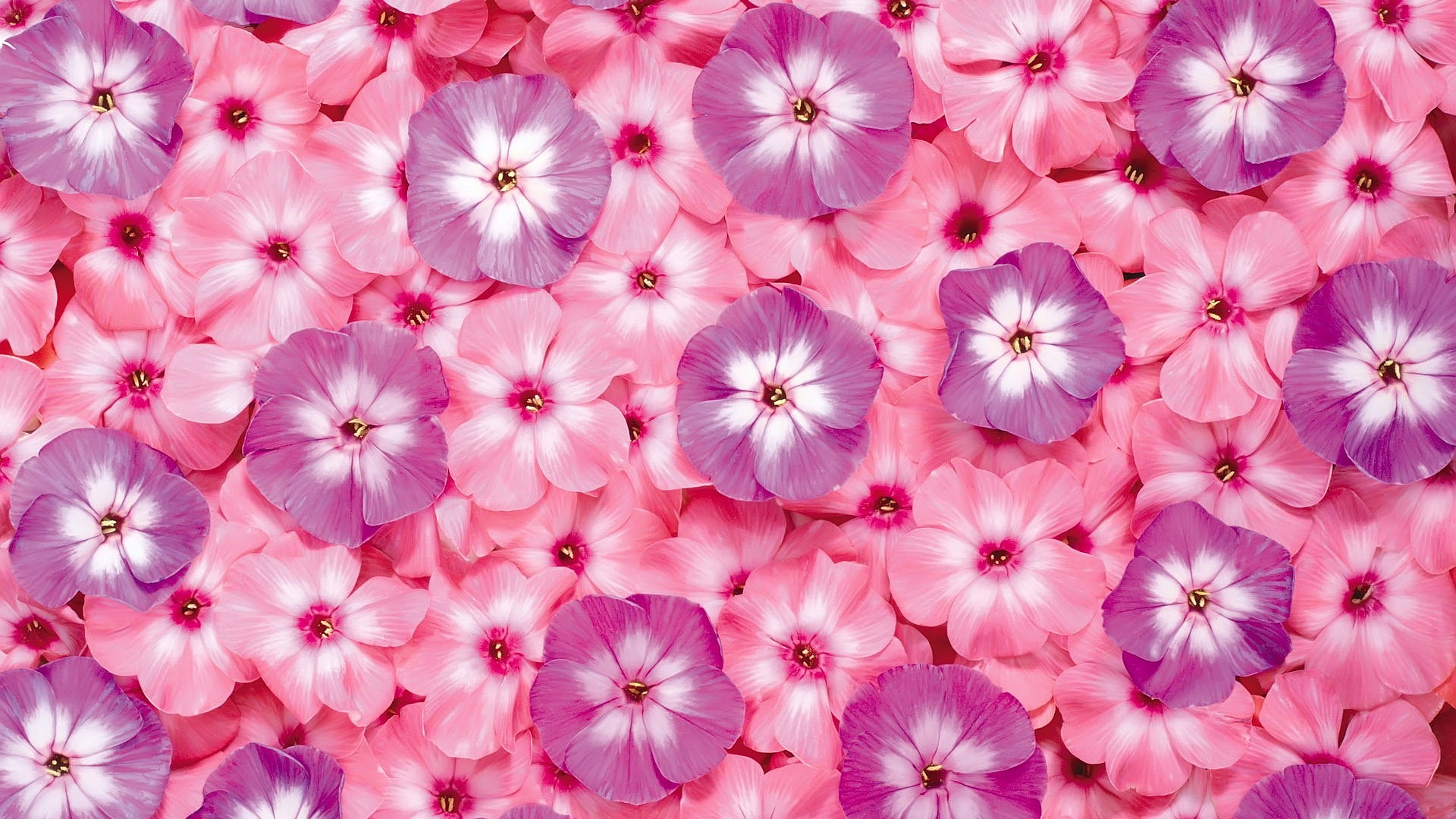 Cute Wallpaper Pictures Free Download Pink Flowers Wallpapers Movie Hd Wallpapers