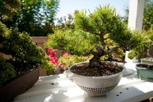bonsai-garden-1