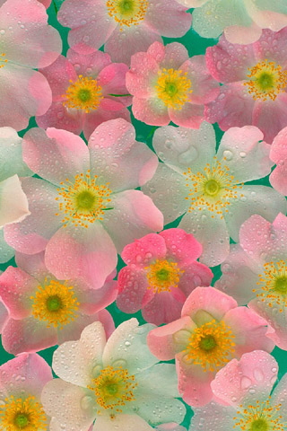 How To Change The Wallpaper On Iphone Free Iphone Wallpapers To Download For Spring 2011 With