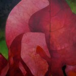 Oli painting of bougainvillea leaf, by Manuel Palacio