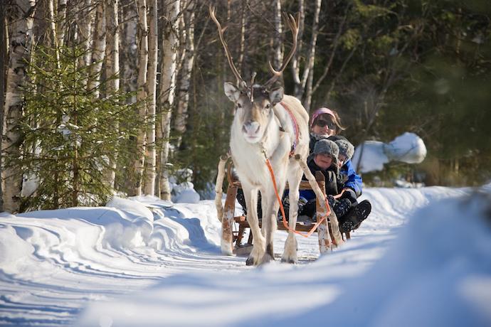 Finnish Lapland Reindeer sledding