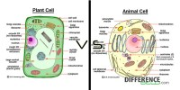 Topic 1.2 Ultra-Structure of Cells - AMAZING WORLD OF ...