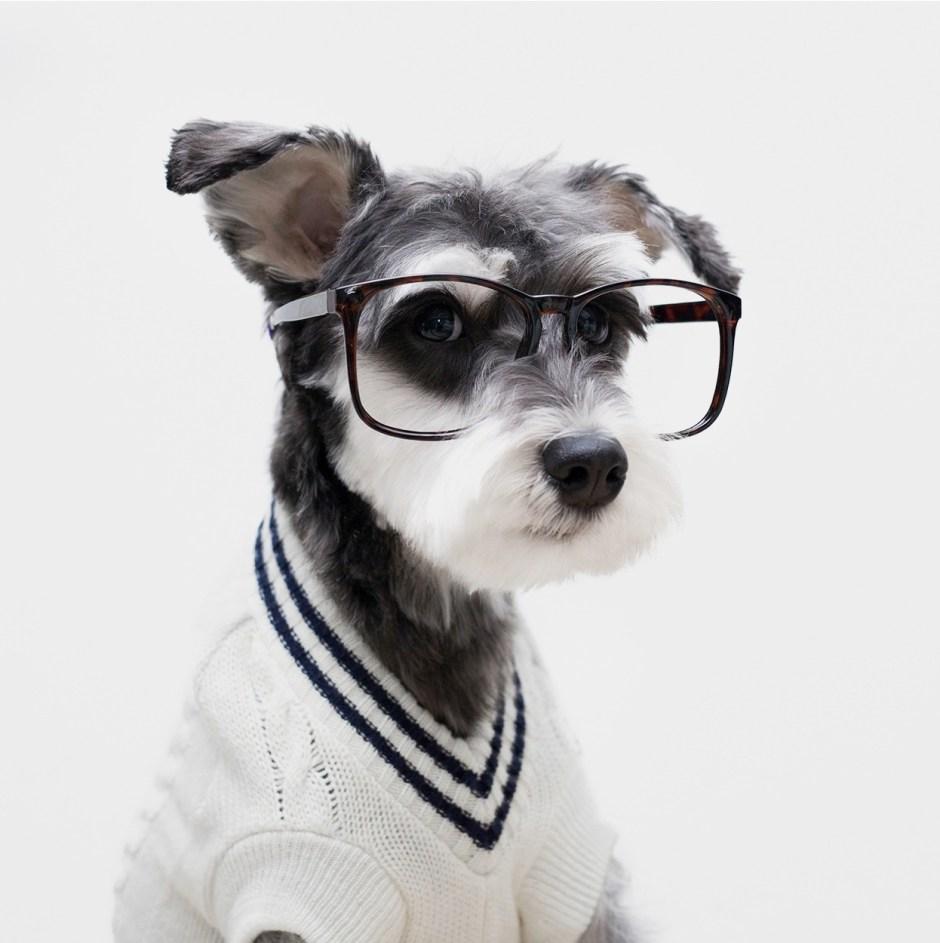 mr porter remix the dog copy