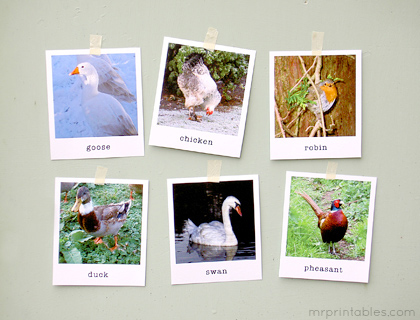 Animal Flash Cards in Polaroid Style - Mr Printables