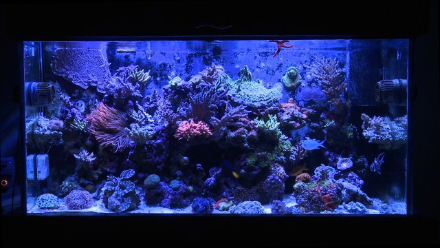 Tank?s 90g Reef Tank ? Now For Sale! ? Mr. Saltwater Tank