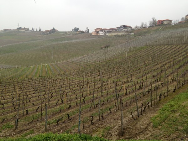Piemonte wine countryside, Italy