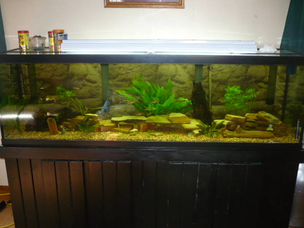 Is a 'no CO2 added' 125 gallon planted tank with 2 or 3 80watt T5HO