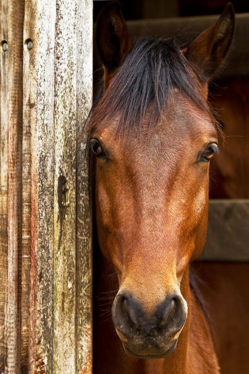 Liability Waivers and Contracts in the Horse Industry