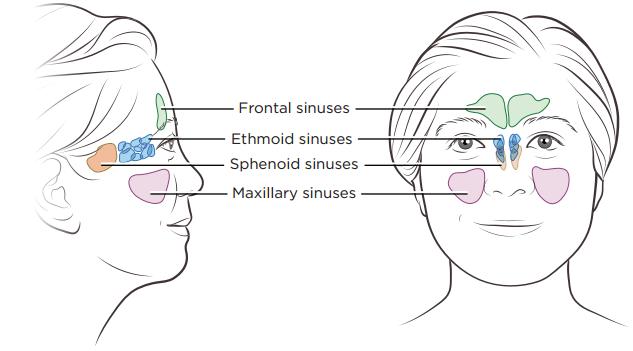of diagram sinusutist
