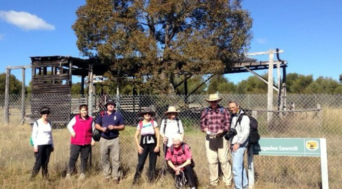 The walkers visiting the former Bengadee Sawmill.