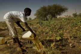 sustainable-development-in-agriculture