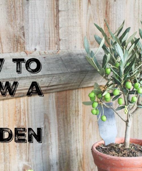 how-to-grow-a-gin-garden