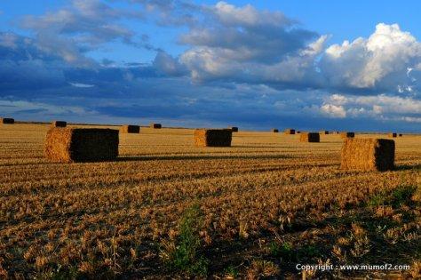 mysundayphoto, silentsunday, harvest, mumof2