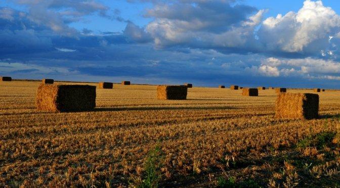 Harvest time, mumof2