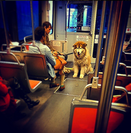 muni cute dog jcxxxx